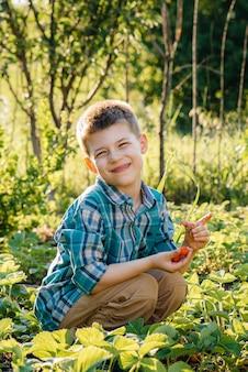 Un ragazzo prescolare carino e felice raccoglie e mangia fragole mature in un giardino in una giornata estiva al tramonto. infanzia felice. coltura sana ed ecologica.