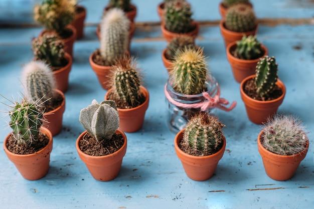 Un sacco di piccoli cactus e piante grasse in vaso