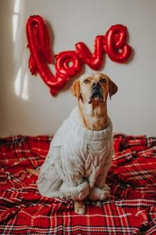 Un simpatico cane seduto sul pavimento con palloncini amore