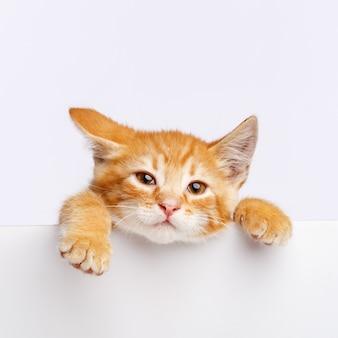 Un simpatico gattino allo zenzero fa capolino dal bordo di una lavagna bianca. copia spazio.