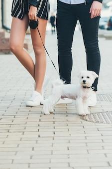 Un simpatico piccolo cane bianco e le gambe di una giovane coppia, in strada