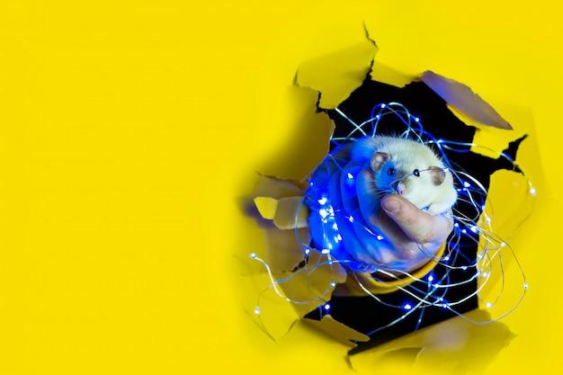 Un simpatico ratto divertente in una ghirlanda di natale sembra fuori da un buco nella carta gialla. spazio pubblicitario.