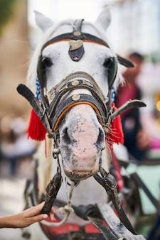 Un simpatico ritratto di cavallo bianco