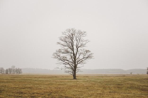 Un singolo albero solo in un campo nel campo nebbioso e nel cielo grigio