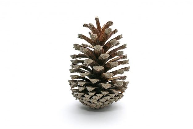 Un singolo pino cono semplice isolato su bianco