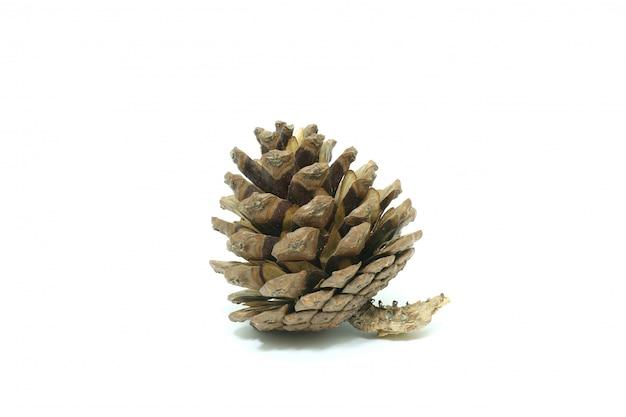 Un singolo pino semplice cono isolato su bianco