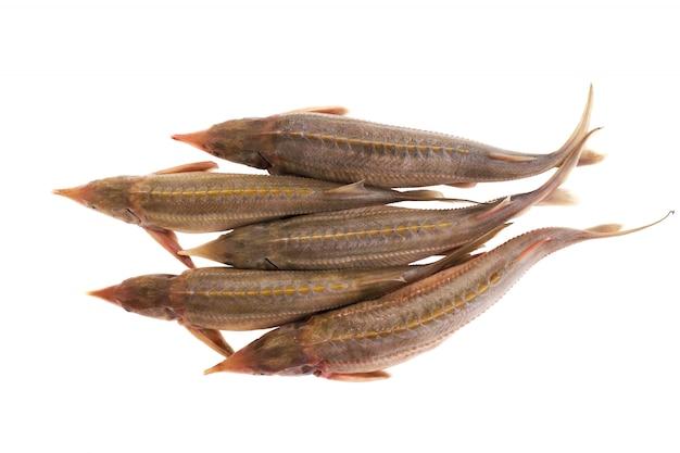 Un tiro di cinque pesci isolato su fondo bianco. pesce fresco per cucinare.