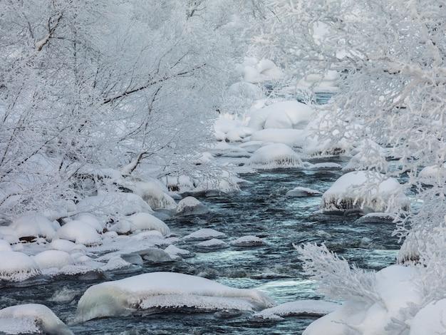 Un torrente invernale in streaming, neve e ghiaccio, fiume circondato da alberi coperti di neve