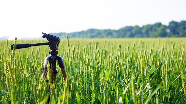 Un treppiede nel campo piantato con giovani spighette verdi di grano, paesaggio.