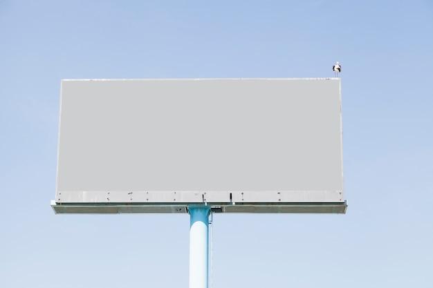 Un uccello che si appollaia sul tabellone per le affissioni vuoto per la pubblicità contro cielo blu