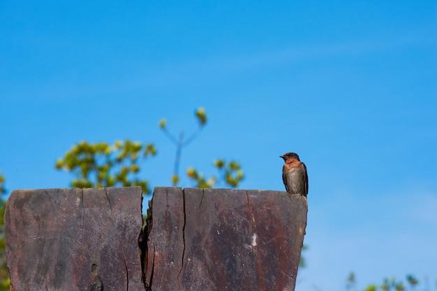 Un uccello del sorso su cielo blu.