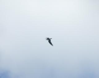Un uccello in volo