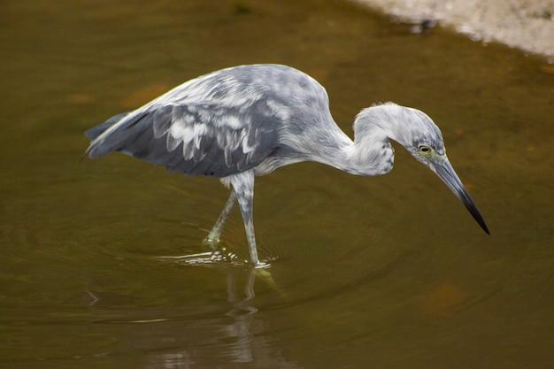 Un uccello nell'acqua