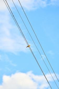 Un uccello si siede su linee elettriche, una vista dal basso verso l'alto del cielo