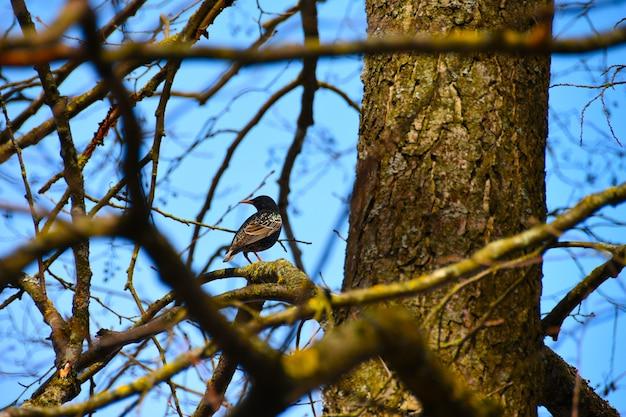 Un uccello si siede su un ramo di un albero