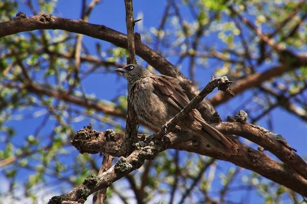 Un uccello su safari in kenia e tanzania, africa
