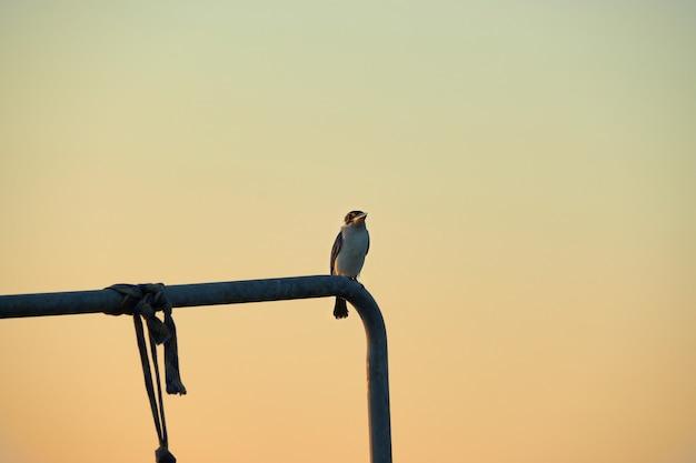 Un uccello sul tubo durante il cielo al crepuscolo.