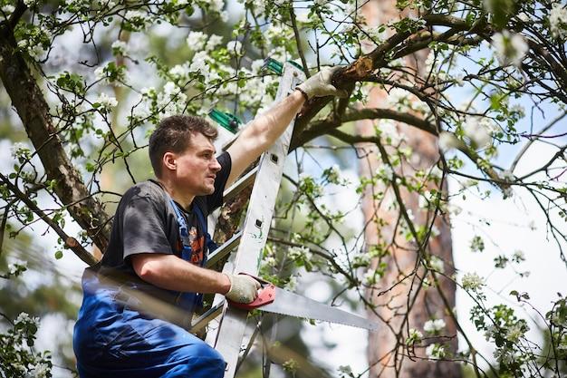 Un uomo con una sega taglia un ramo di un melo in fiore nel giardino.