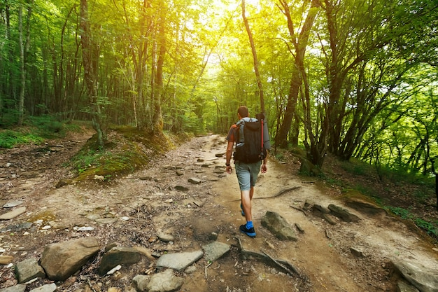 Un viaggiatore con uno zaino nella foresta di primavera sul sentiero guarda avanti. luce solare attraverso le corone degli alberi.