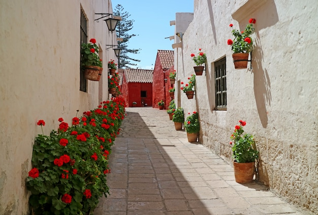 Un vicolo pieno di arbusti fioriti rossi e fioriere in terracotta appese alle vecchie mura dell'edificio