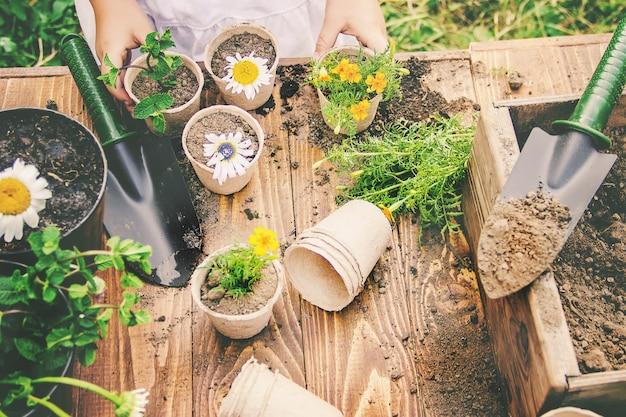 Una bambina sta piantando fiori. il giovane giardiniere. messa a fuoco selettiva
