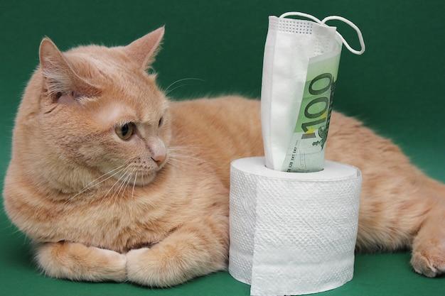 Una banconota da 100 euro spunta da un rotolo di carta igienica. il gatto rosso è sdraiato accanto ad esso e lo sta fissando.