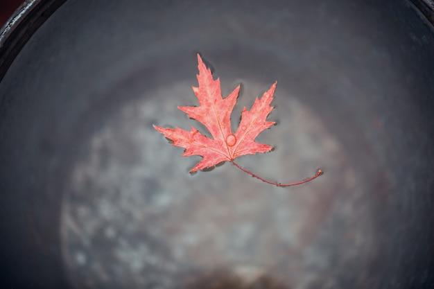 Una bella foglia d'acero rossa galleggia sulla superficie dell'acqua in un secchio di latta