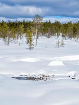 Una bella foresta invernale coperta di neve in finlandia
