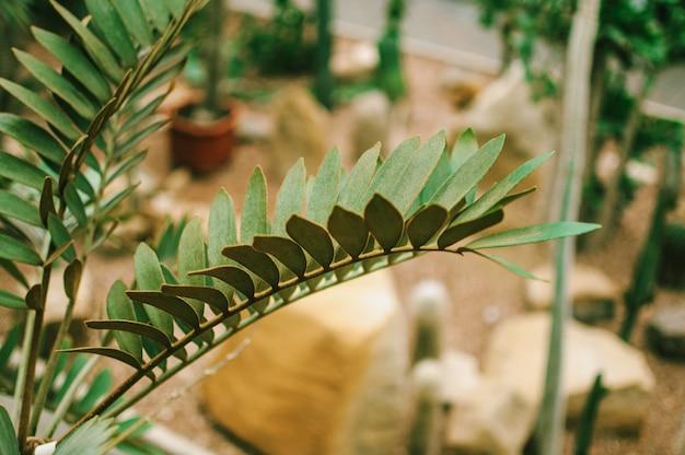 Una collezione di piante grasse, cactus, echeveria kalanchoe e succulente piante da appartamento. le piante grasse sono coltivate in serre al sole. concetto di pianta da interno per la decorazione. messa a fuoco selettiva.