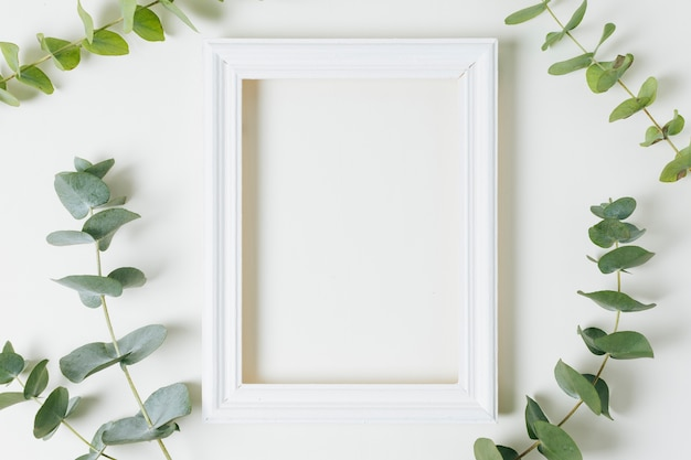 Una cornice vuota bordo bianco circondato con ramoscello di foglie verdi su sfondo bianco