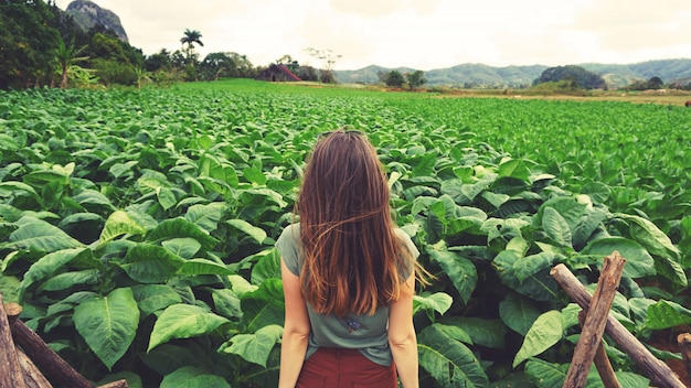 Una donna che esamina il campo di tabacco verde a cuba