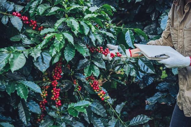 Una donna in mano con in mano un quaderno e in piedi vicino alla pianta del caffè, imparando a conoscere il caffè