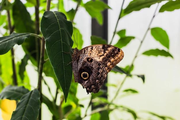 Una farfalla su una foglia verde