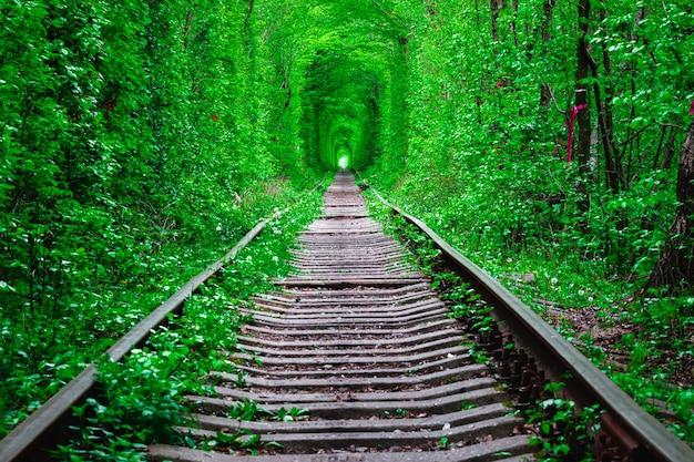 Una ferrovia in primavera tunnel dell'amore
