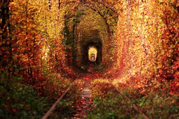 Una ferrovia nel tunnel della foresta d'autunno d'amore