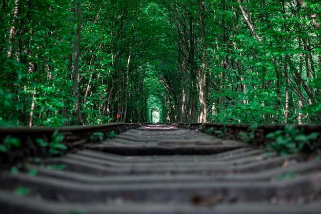 Una ferrovia nel tunnel della foresta di primavera dell'amore