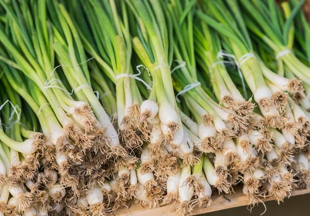 Una fila ordinata di cipolle in primavera confezionate con elastici rossi pronti per la vendita al mercato. cipollotto. cipolla verde primavera matura. foglie di cipolla verde