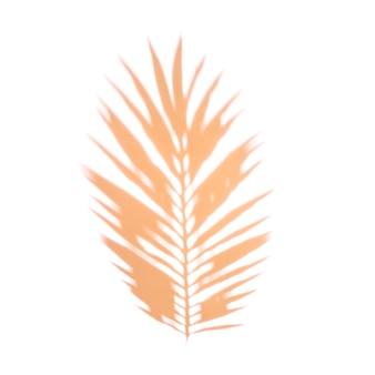 Una foglia di palma arancione su sfondo bianco