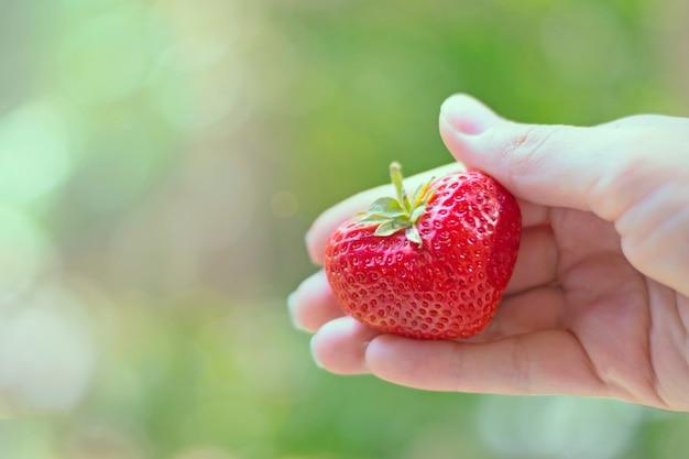 Una forma insolita di fragola sotto forma di un cuore nel palmo della tua mano alla luce del sole su un verde.
