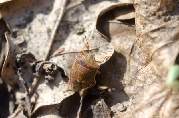 Una foto del primo piano del piccolo insetto nella foresta