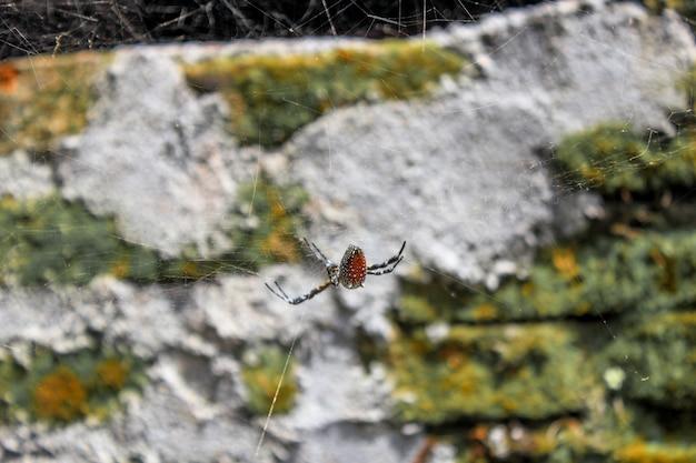 Una foto del ragno di profitto dell'animale