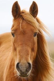Una foto di un cavallo in libertà
