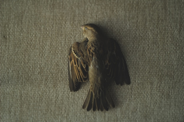 Una foto di un passero morto