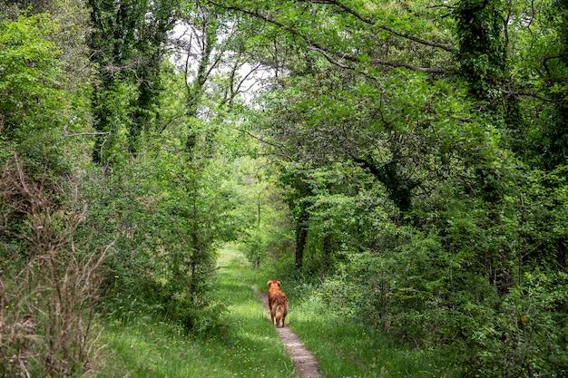 Una giornata di treeking con il cane a collsacabra.