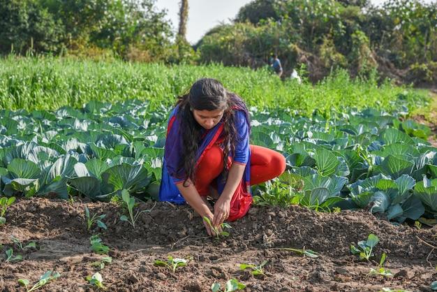 Una giovane contadina indiana che lavora nel campo dell'azienda agricola del cavolo.