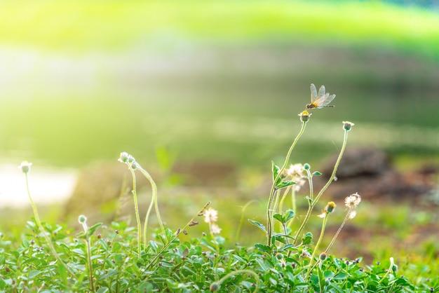 Una libellula si è appollaiata sul fiore nel giardino della natura