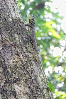 Una lucertola in un albero nella giungla di puerto maldonado. perù