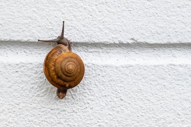 Una lumaca sul muro bianco