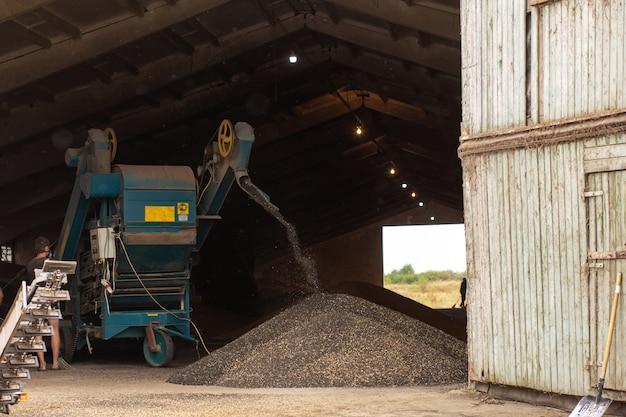 Una macchina per estrarre semi da girasoli in un capannone. montagna di semi di girasole. raccolta girasole