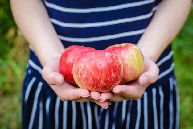 Una mela di tre rossi in primo piano delle mani